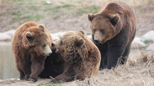饲养员遭熊攻击身亡